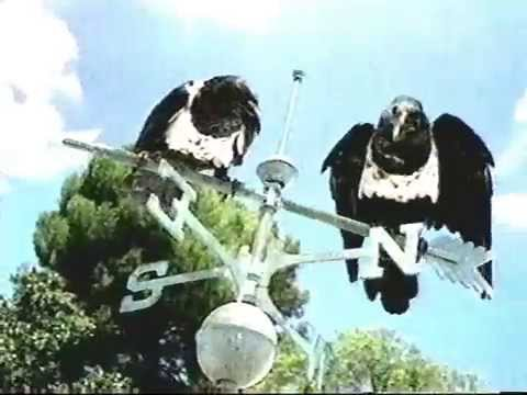 Windex Talking Crows Commercial 1999