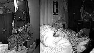 видео: Мужчина устанавливает камеру, чтобы увидеть, что делает его кот пока он спит и это весело!