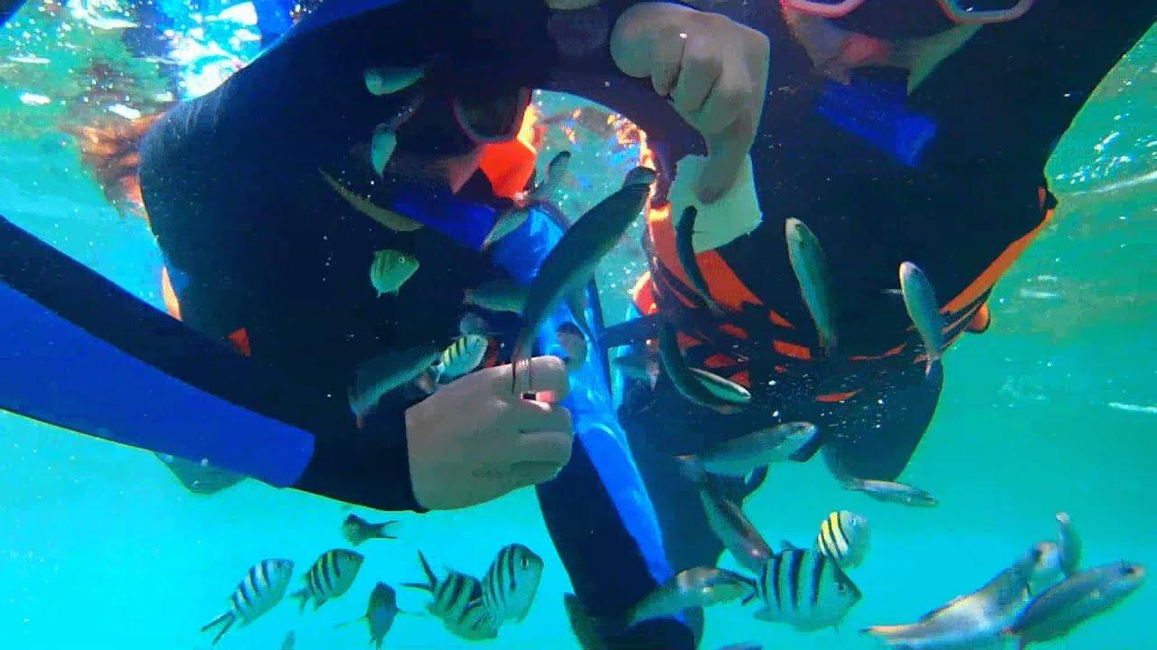 墾丁 水到魚行浮潛館 - YouTube