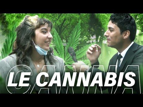 LE CANNABIS EST-IL DANGEREUX ? 🤩 - YouTube