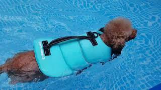 구명조끼 입으니 수영이 더 신나요~?♂️
