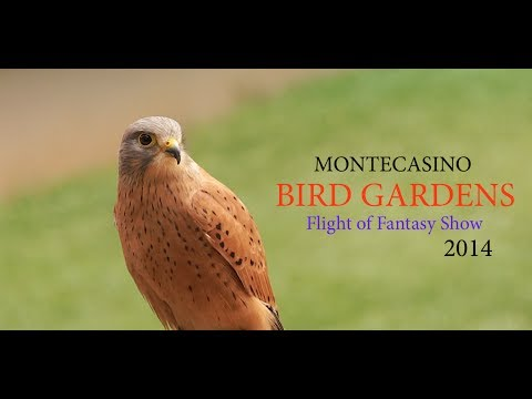 Montecasino Flight of Fantasy Show 2014