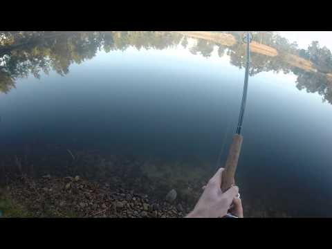 Nepean River Carp Fishing