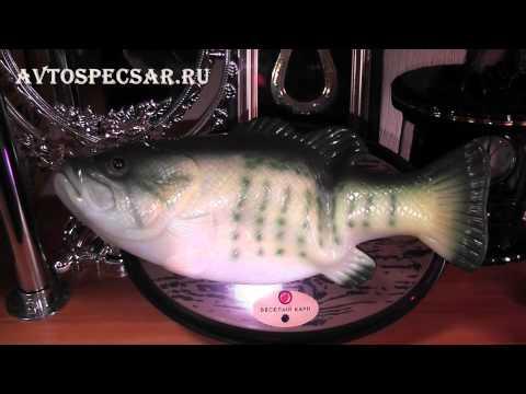 Карп музыкальный Http://avtospecsar.ru