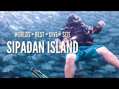 BEST DIVE SITE IN THE WORLD - SIPADAN ISLAND!!!!  (180 | Southeast Asia Travel VLOG)