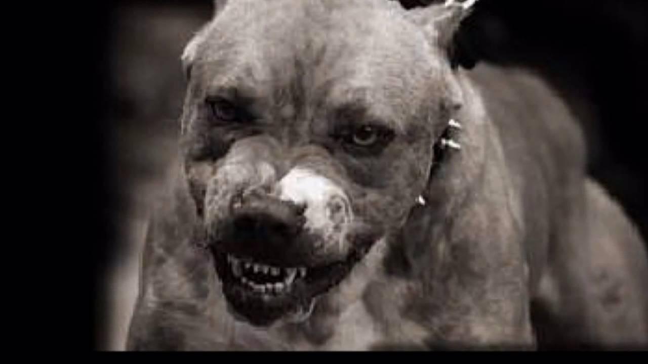 perros peligrosos x tony - YouTube