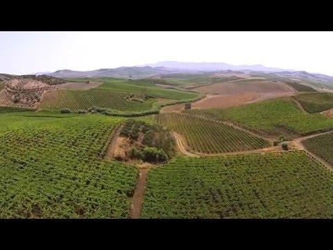 Sicily Wine Farm Agriturismo tarantola  Drone