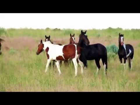 Wild Horses July