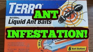 Terro Liquid Ant Bait:  Does it work?