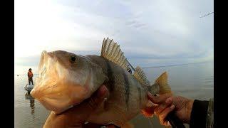 Рыбалка с ночевкой! Ловля КОНЕ-ОКУНЕЙ на Обском море!!!!