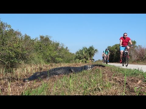 Alligators and a 15-mile Bike Ride | Shark Valley