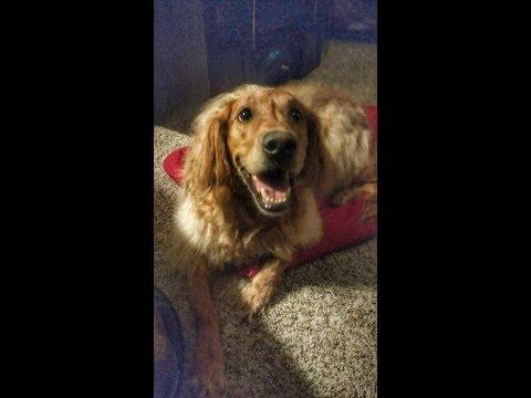 Therapy Dog Training Omaha