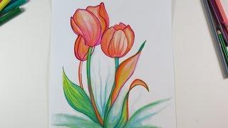 drawing tulips drawings diy