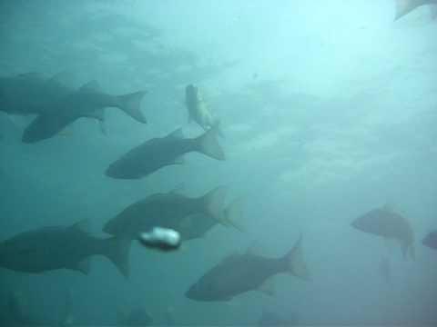 Scuba Diving the St. Clair River 4