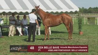 Grand Show Anglo 2016 : Lot 48 - EZA BELLE SAVE