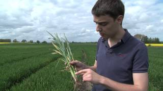 What are crop diseases?