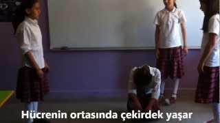 Fen ve Teknoloji Dersi 6. Sınıf Ünite...