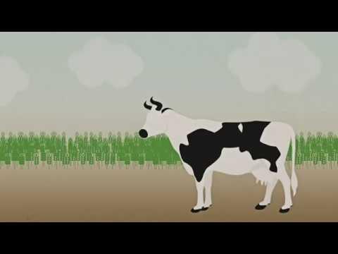 Animation: GMOs vs. gene-edited foods