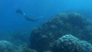 Freediving моноласта, КОМОДО