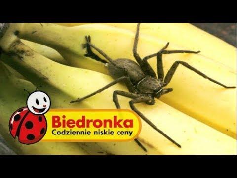 5 Jadowitych Zwierząt Znalezionych W Supermarketach Youtube