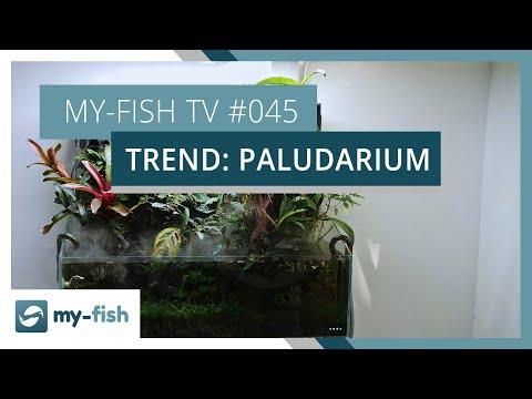 Das Paludarium als Übergangsform zwischen Aquarium und Terrarium | my-fish TV