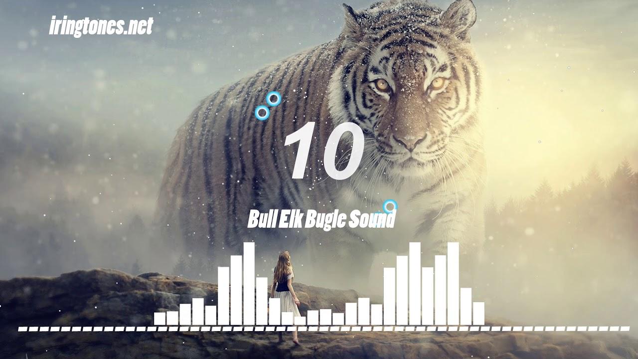 2 Top 13 Animal Ringtones Iringtones Net Youtube Animal Sounds Animals Ringtones