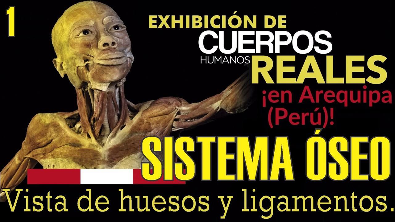 Exposición de CUERPOS HUMANOS REALES: El Sistema Óseo - YouTube