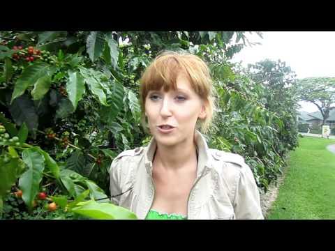 Ania, coffee internship in Hawaii, video in Polish