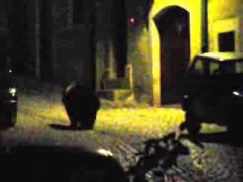 Orso nel centro storico di Civitella Alfedena