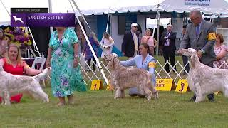 Setters (English) | Breed Judging 2021