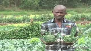 Kenyan Exotic Vegetables Farmer