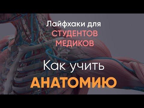 Как запомнить мышцы по анатомии