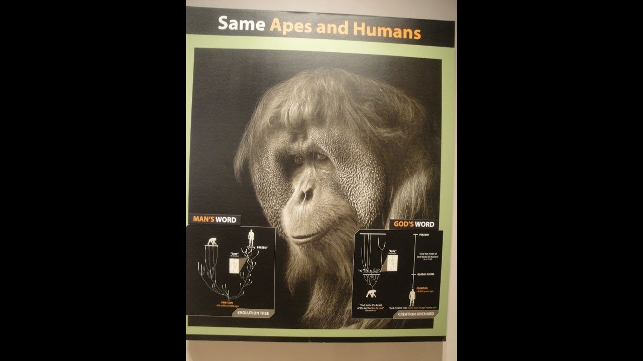 Von Welchem Affen Stammt Der Mensch Ab