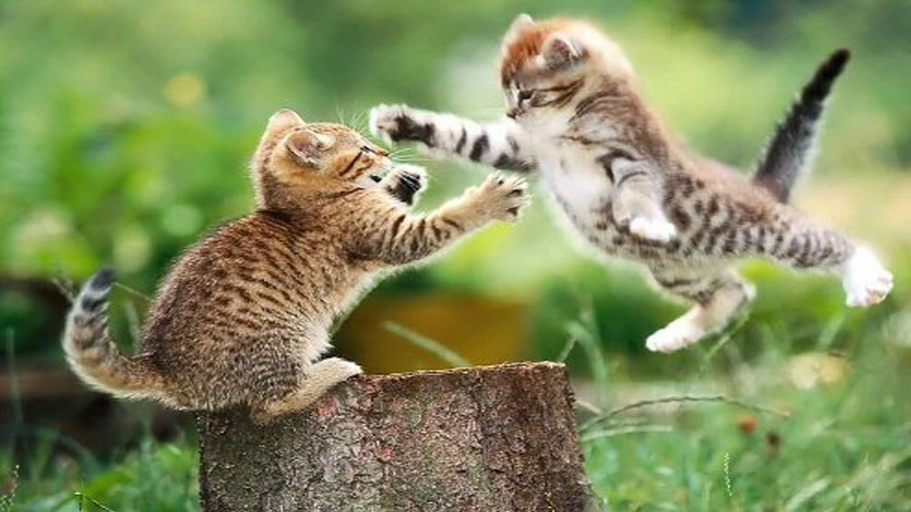 Cute Wallpapers Of Kittens And Puppies Two Cats On A Ladder Battle Youtube
