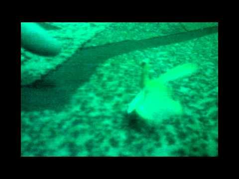 знакомства тамбов жуков