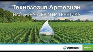 ТЕХНОЛОГИЯ АРТЕЗИАН - Нова елитна генетика за максимални добиви от царевица на Syngenta