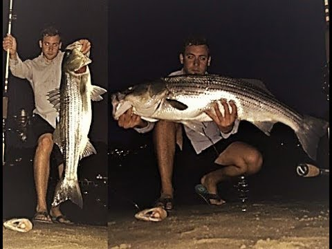 HUGE STRIPER caught from Beach in Centerport, NY.
