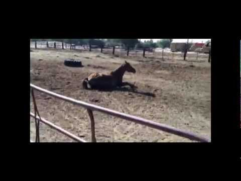 Funny Talking Horse