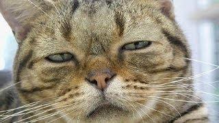 Очень спокойный кот Xd