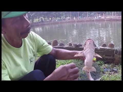 Pemancingan Kabeda