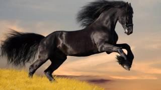 фото фризких лошадей