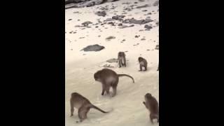 Sex monkey
