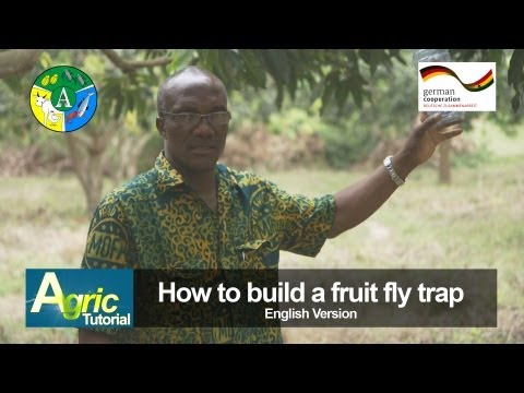 How to build a fruit fly trap - Ghana