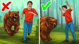 Phải làm gì khi bạn gặp phải một con gấu