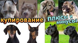 Почему запретили купировать уши и хвосты собакам? Мокрый нос