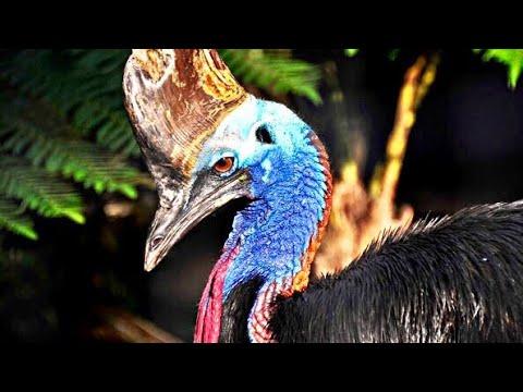 Found EXOTIC BIRD RESCUE FACILITY!