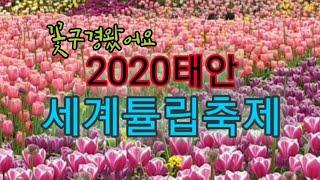 #태안세계튤립축제#태안튤립축제-2백만송이  꽃잔치구경하…