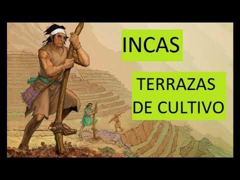 Cultivos Mayas Aztecas E Incas