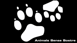 Un día para no olvidar - Animals Sense Sostre