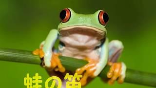 童謡唱歌 蛙の笛 byうたこ
